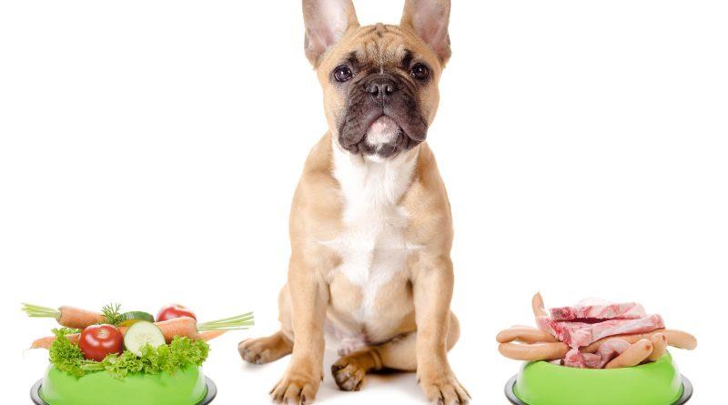 veterinario nutrizionista
